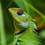 Lizard,GreenForest 1073_fcw