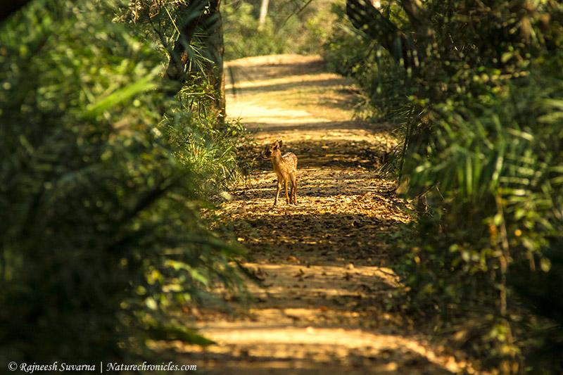 © Rajneesh Suvarna